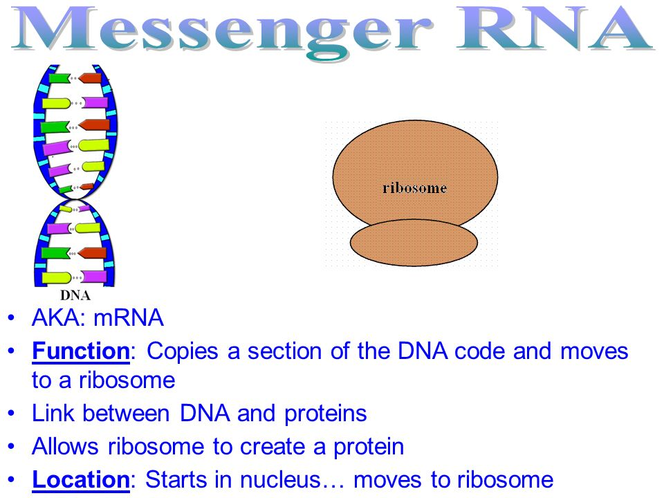 Messenger RNA AKA: mRNA