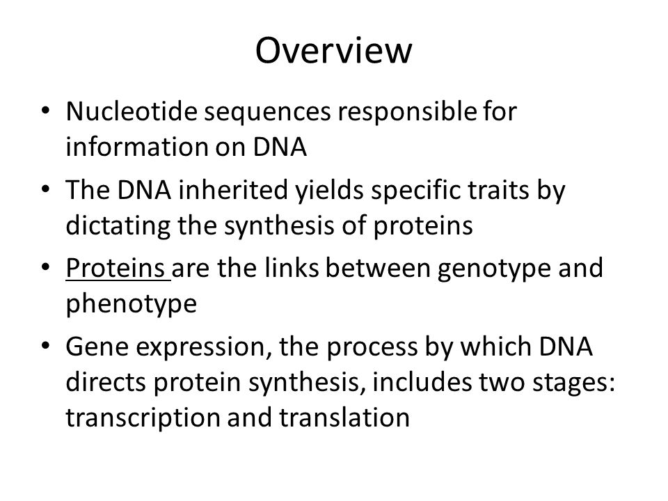 an analysis of the expression of a gene in protein synthesis Gene expression the process by which the genetic code - the nucleotide sequence - of a gene is used to direct protein synthesis and produce the structures of the cell gene.