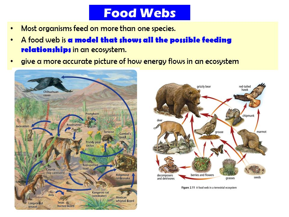 Single Species Models For Many Species Food Webs porn videos
