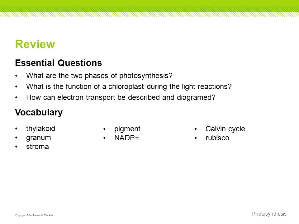 Aim      How are plants adapted to perform photosynthesis    ppt     BioSolar Cells