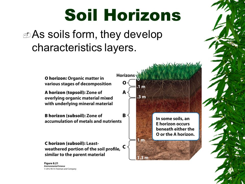Soils chapter 10 brooks cole publishing company itp for What are soil characteristics