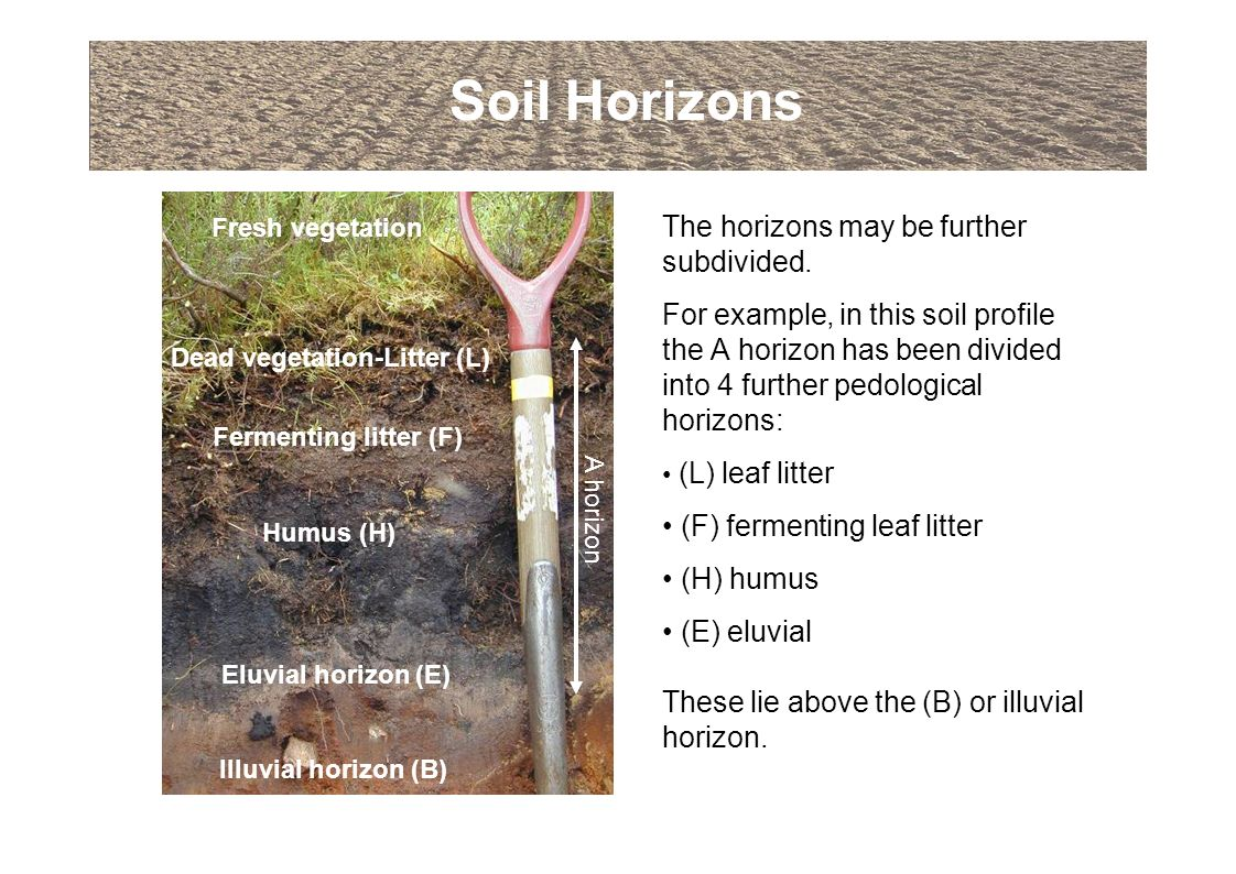 An introduction to soils and soil terminology ppt download for Soil details