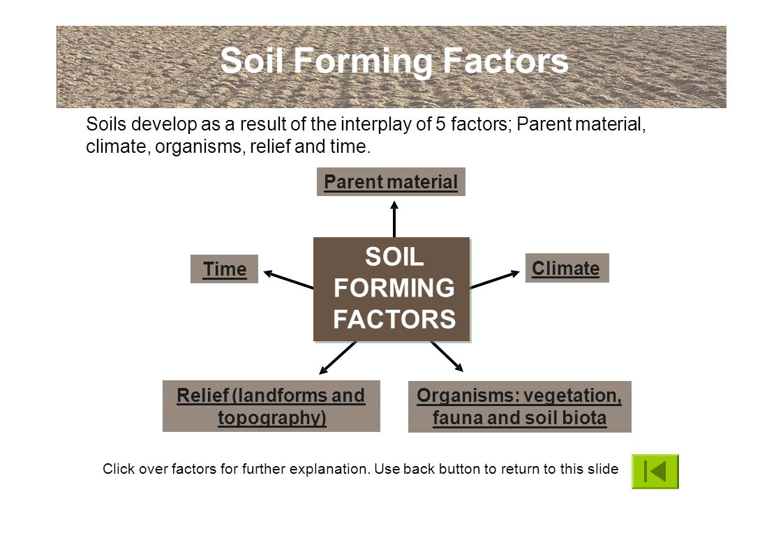 An introduction to soils and soil terminology ppt download for Soil forming factors