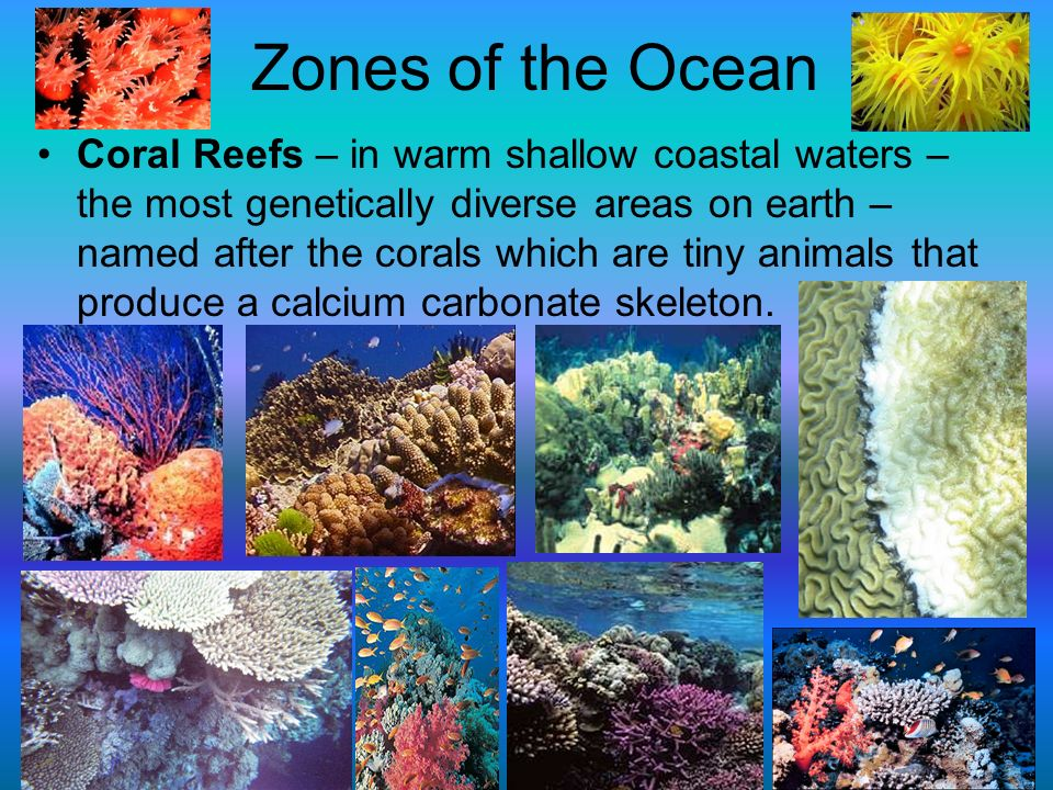 coral reefs houses diverse community of species Provide habitat for diverse communities of marine animals and  animals, the  bulk of a coral reef eco-  since a coral reef houses so many different world, it is .