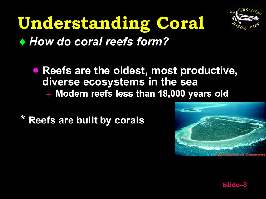 Coral Reefs. - ppt download