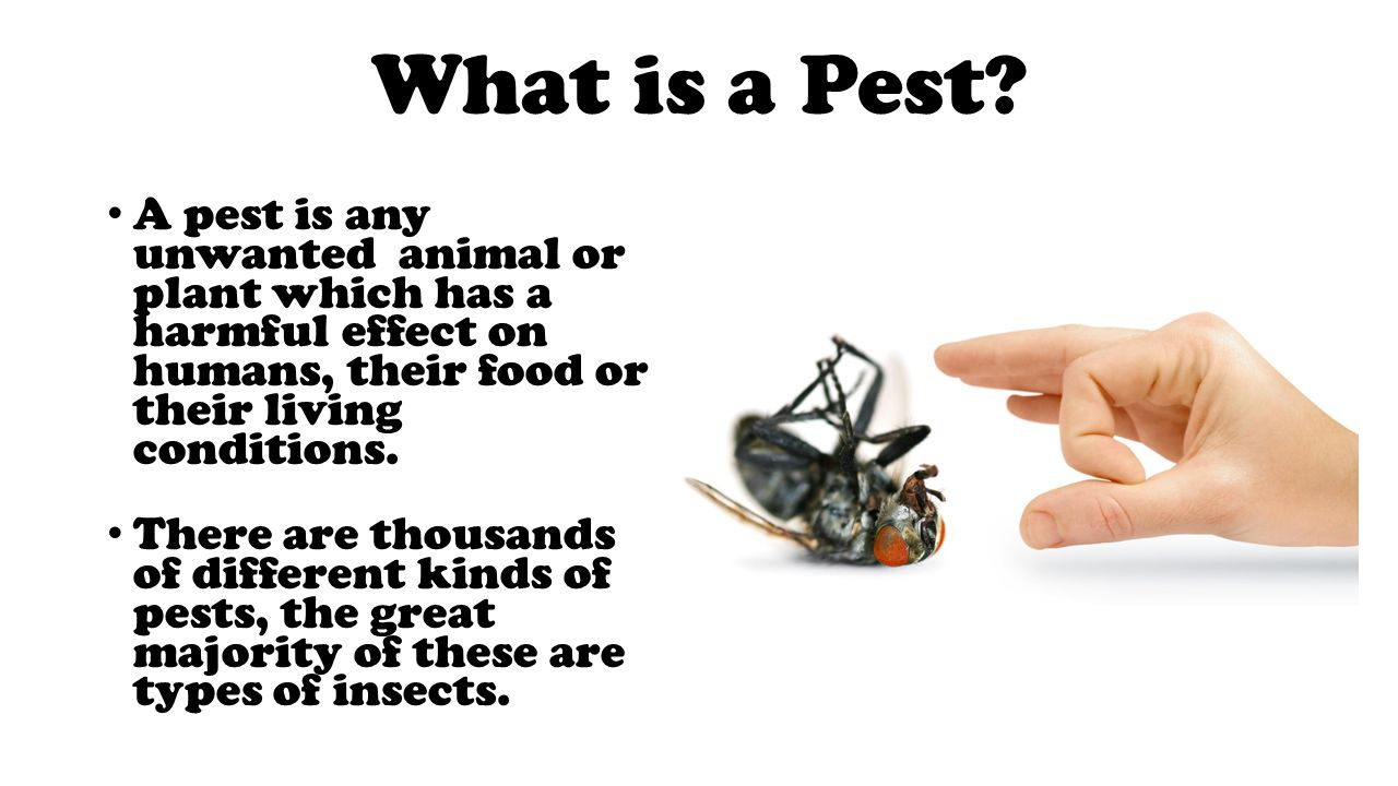 the different methods of pest control and their effects on the environment Common sense pest control 2  destructive to the pest and least disruptive to natural pest control methods  health problems and other adverse health effects in.