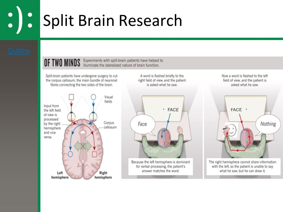 an analysis of the split brain Home physiological sperry (split brain) study sperry (split brain) sperry, rw (1968) hemisphere deconnection and unity in consciousness background.