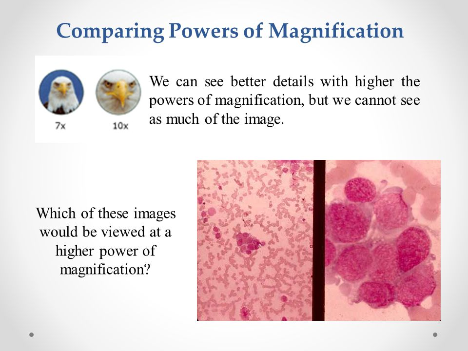 The History Behind Cells Ppt Video Online Download