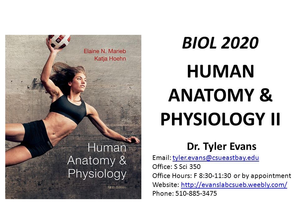 Erfreut Anatomy And Physiology Courses For Pilates Bilder ...