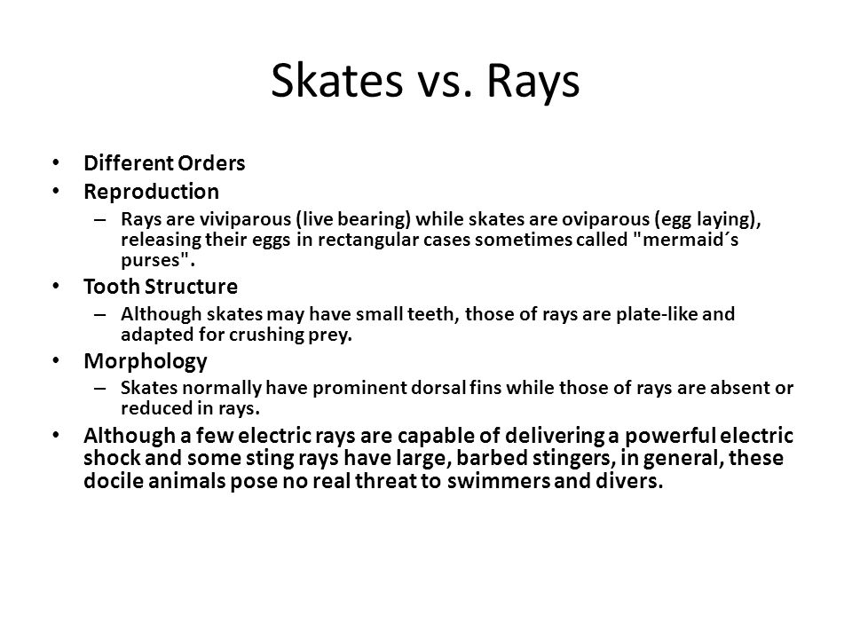 Skates vs. Rays Different Orders Reproduction Tooth Structure