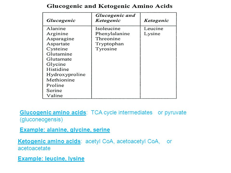Ketogenic Amino Acids Can Be Converted To Glucose | All Articles about Ketogenic Diet