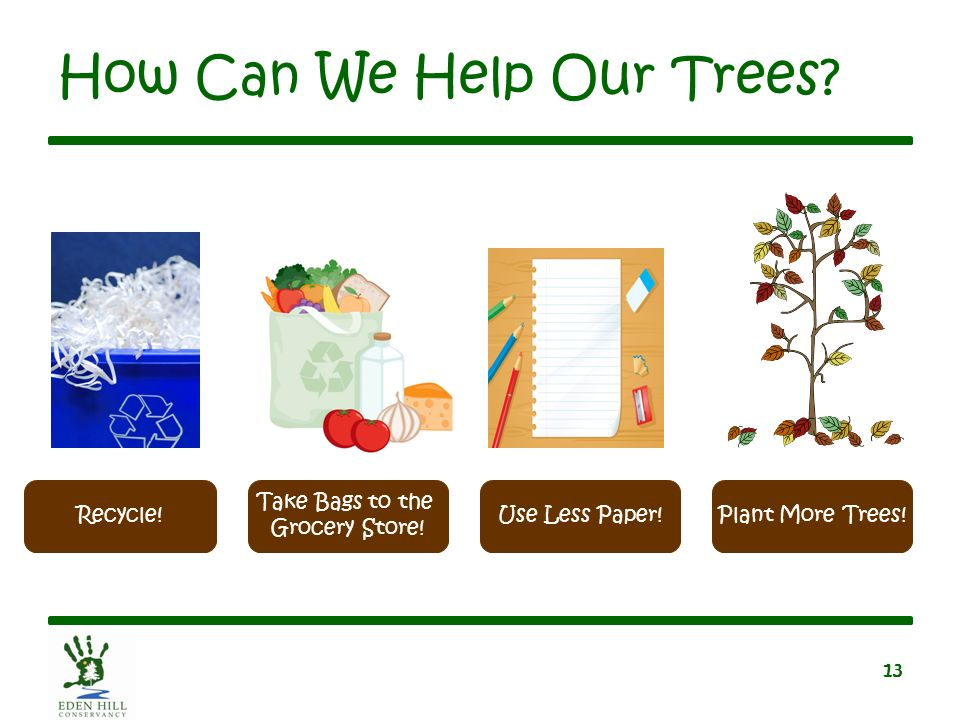 Let s learn about trees ppt video online download for What do we use trees for
