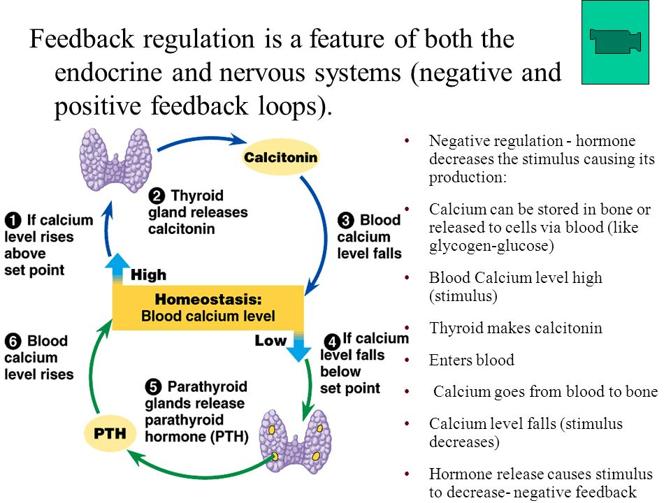 positive and negative effects of hormonal To distinguish negative feedback from positive feedback to summarize the role of the endocrine system in homeostasis however, sex hormones do have an effect on other body systems, and an imbalance in sex hormones can lead to various disorders.
