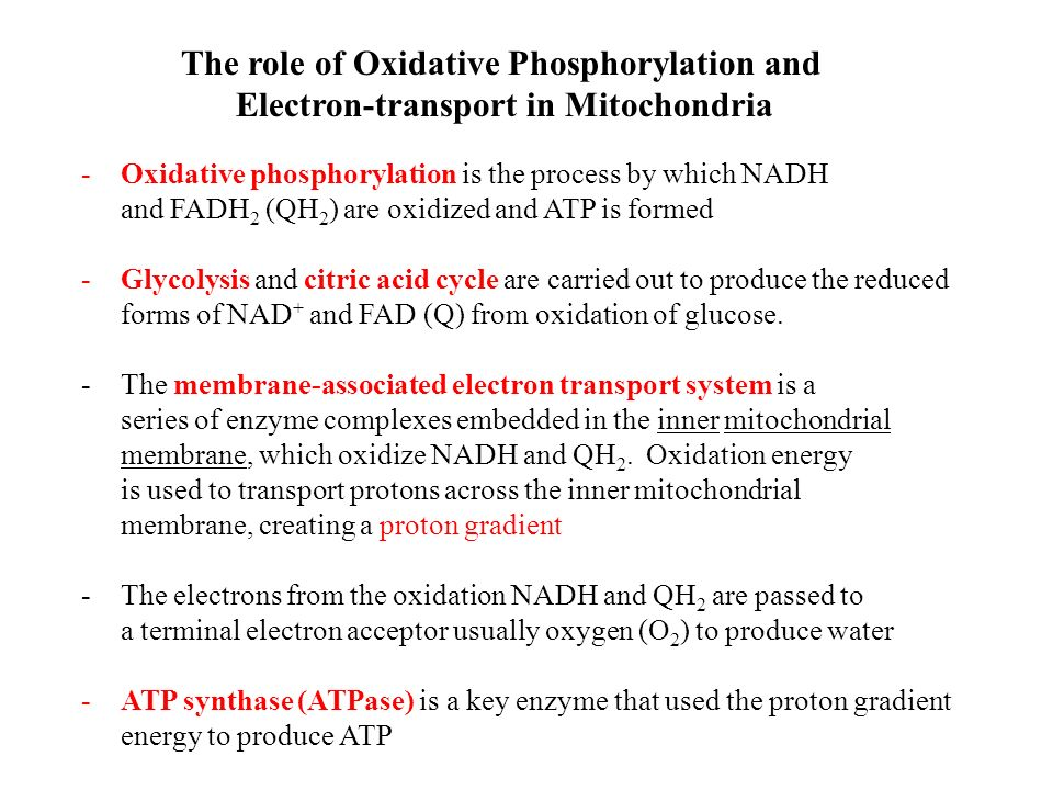 The Electron-Transport Chain - ppt video online download