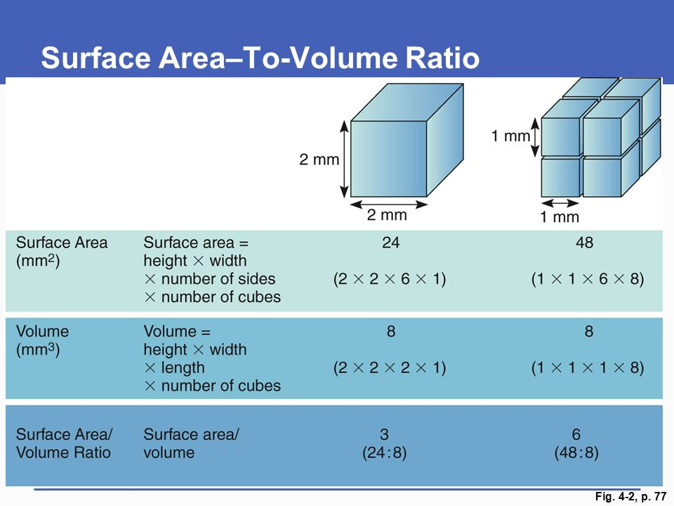 diffusion surface area to volume ratio and cube essay International baccalaureate biology tutorial 216 explain the importance of the surface area to volume ratio surface area, volume diffusion _lab.