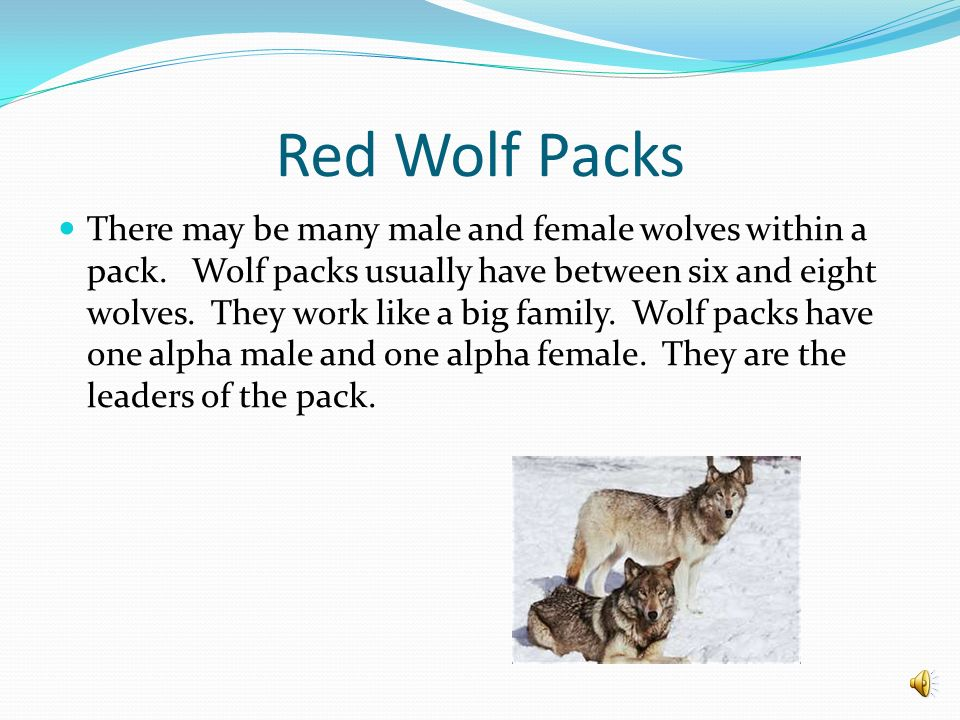 Red Wolf Packs