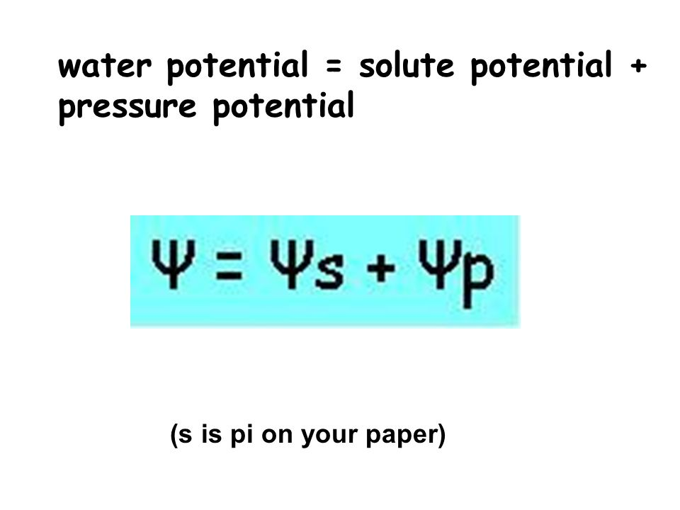 relationship between solute concentration and water potential