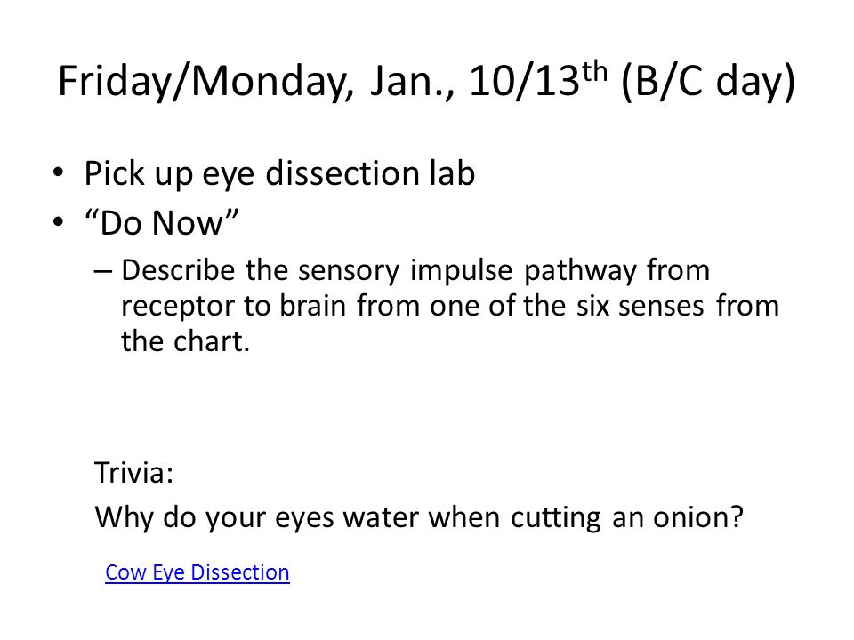 Cow eye dissection lab conclusion