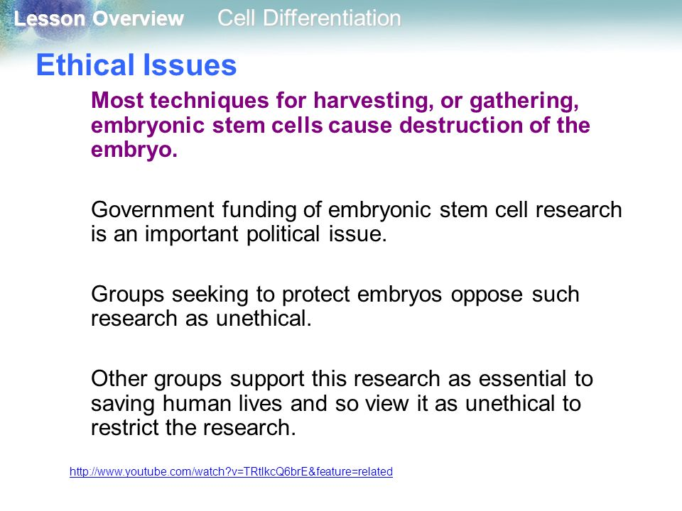 Ethical Issues Most techniques for harvesting, or gathering, embryonic stem cells cause destruction of the embryo.