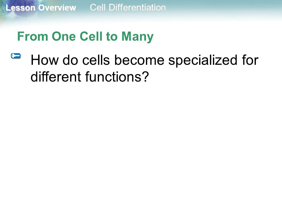 How do cells become specialized for different functions