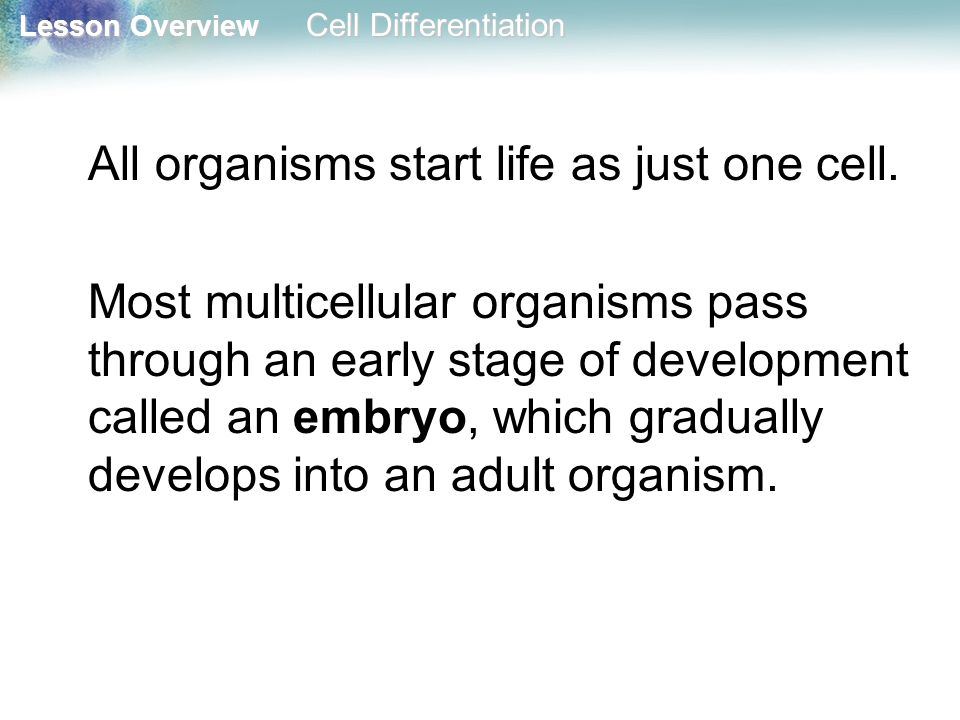 All organisms start life as just one cell.