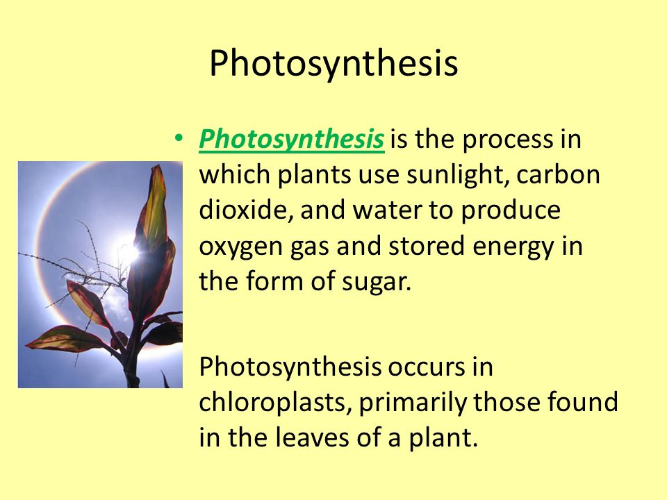 Photosynthesis Chapter ppt video online download