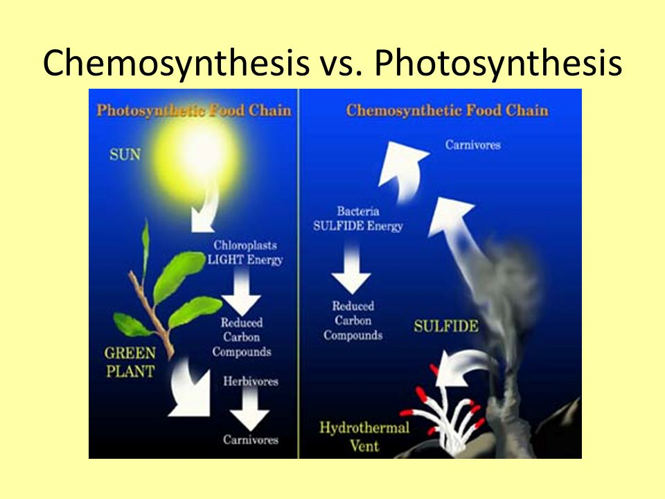 chemosynthesis or