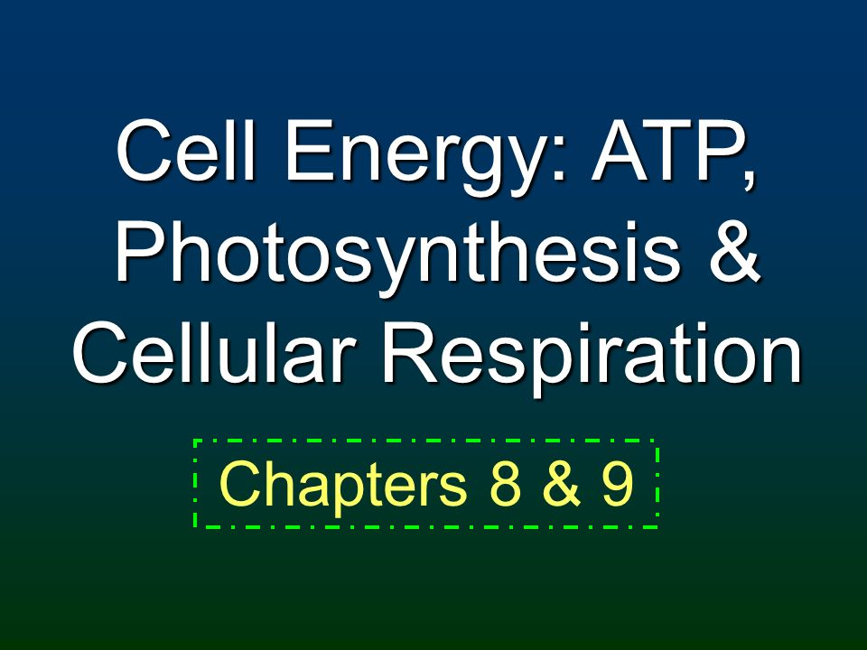 Cell Energy: ATP, Photosynthesis & Cellular Respiration