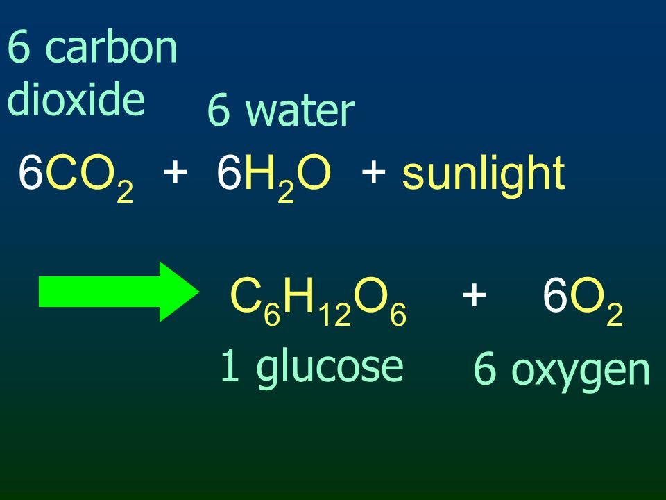 6CO2 + 6H2O + sunlight C6H12O6 + 6O2 6 carbon dioxide 6 water