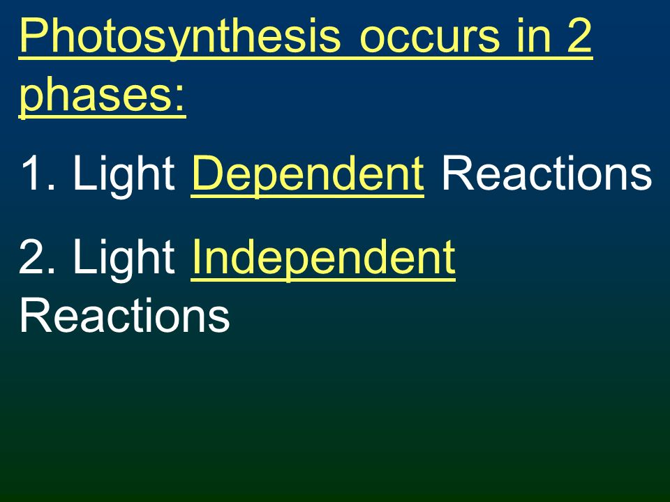 Photosynthesis occurs in 2 phases: