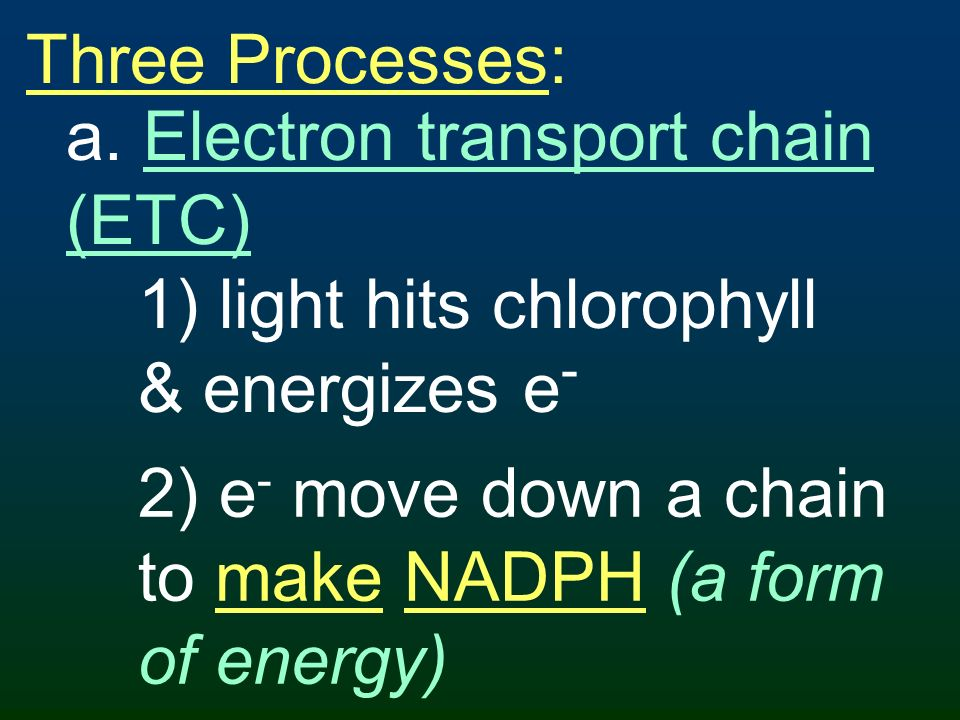 Three Processes: a. Electron transport chain (ETC) 1) light hits chlorophyll & energizes e-