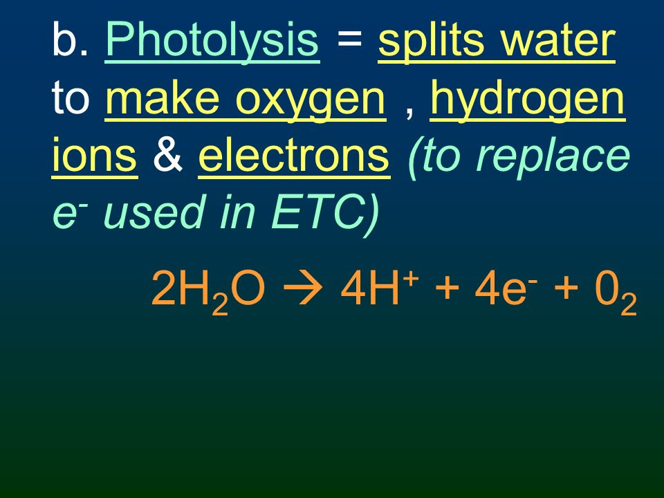 b. Photolysis = splits water to make oxygen , hydrogen ions & electrons (to replace e- used in ETC)