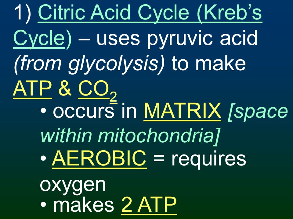 1) Citric Acid Cycle (Kreb's Cycle) – uses pyruvic acid (from glycolysis) to make ATP & CO2