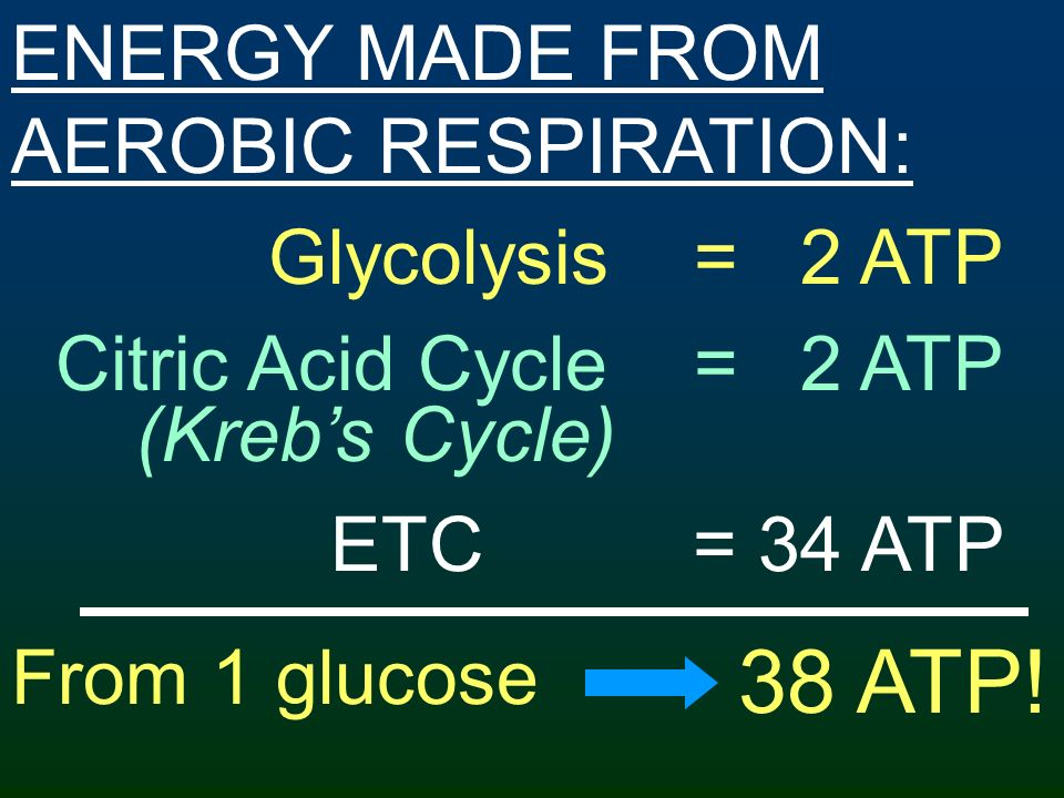 38 ATP! ENERGY MADE FROM AEROBIC RESPIRATION: Glycolysis = 2 ATP