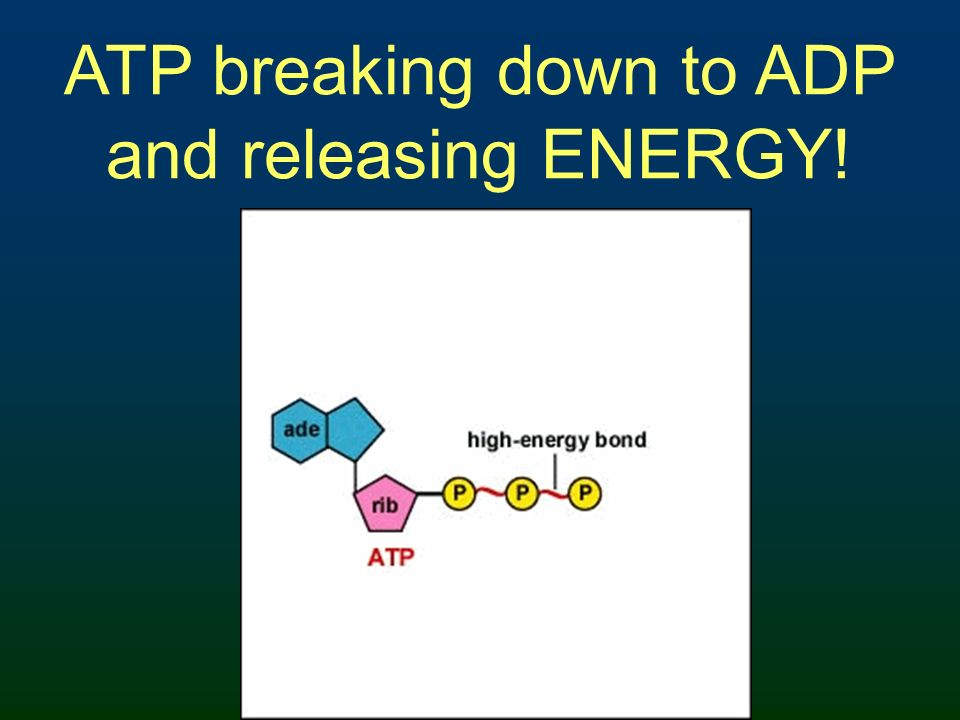 ATP breaking down to ADP and releasing ENERGY!