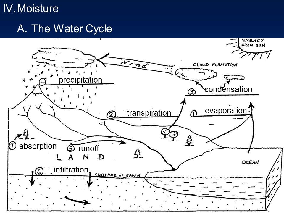 Moisture A The Water Cycle Precipitation Condensation Evaporation