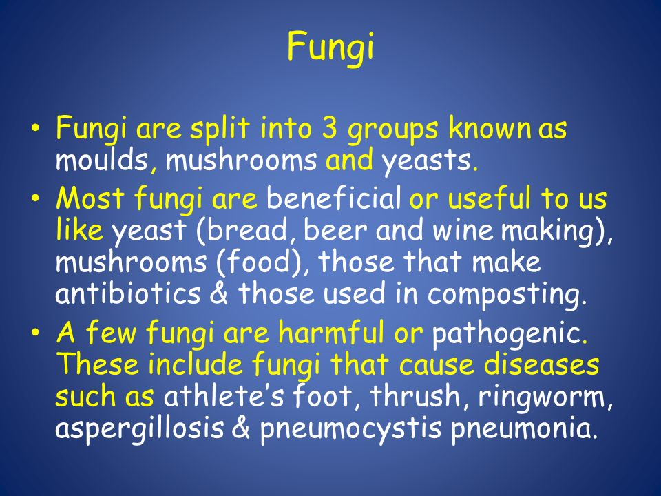 Fungi Fungi are split into 3 groups known as moulds, mushrooms and yeasts   Most fungi are beneficial or useful to us like yeast (bread, beer and wine