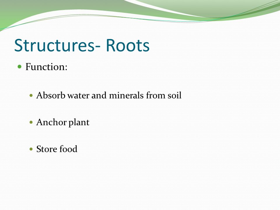 Plants as living organisms ppt video online download for Minerals found in soil