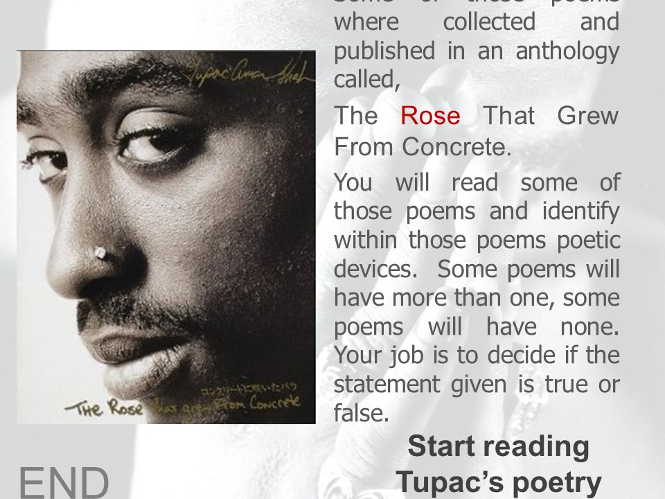 the rose that grew from concrete and and tomorrow by tupac shakur essay Find free free essay on do for love by tupac shakur the rose that grew from concrete the rose that grew from concrete tupac shakur could possibly be the most.