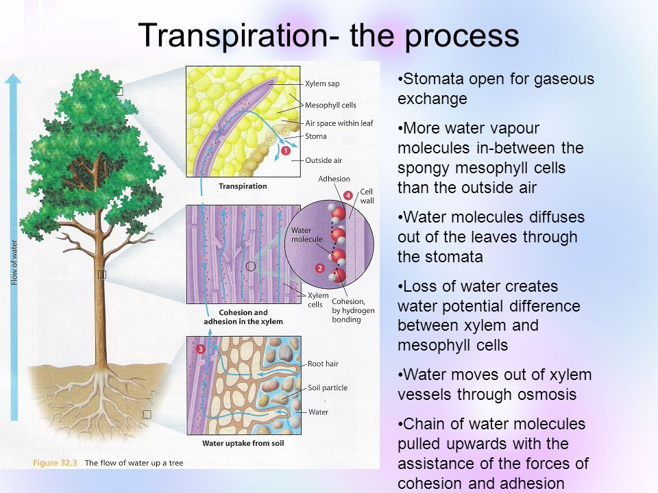 process of transpiration in plants pdf