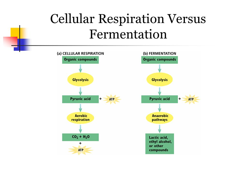 cellular respiration through alcoholic fermentation essay 2014-2-19  kevin quick 19th february 2014 effects of sucrose concentration on cell respiration in yeast  or alcoholic fermentation.