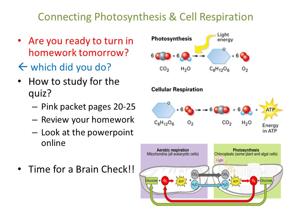 Photosynthesis Homework Help
