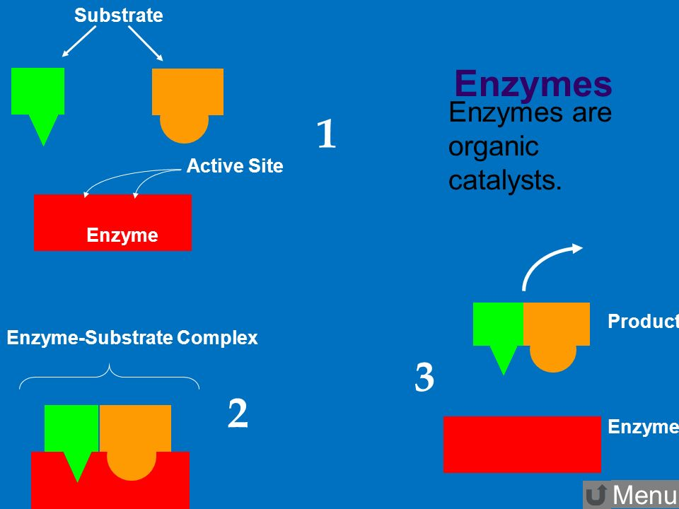 enzymes and substrates relationship goals