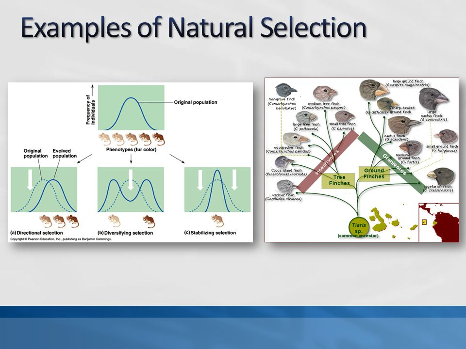 Natural Selection Variation Isolation And Selection