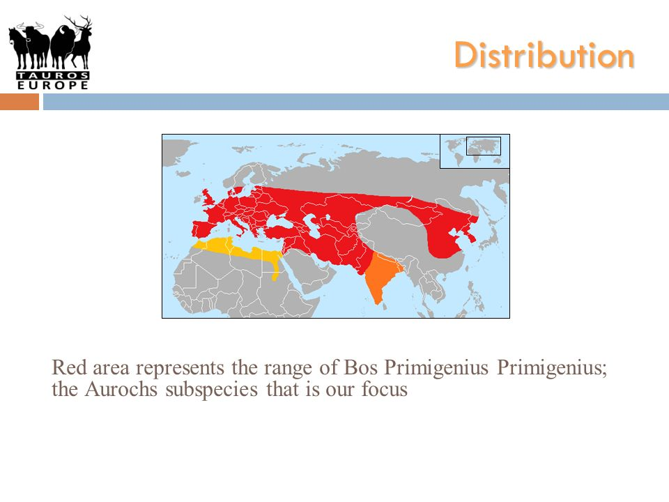 Distribution Red area represents the range of Bos Primigenius Primigenius; the Aurochs subspecies that is our focus.