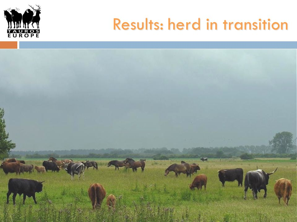 Results: herd in transition