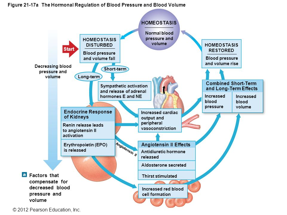 An overview of hypertension blood pressure