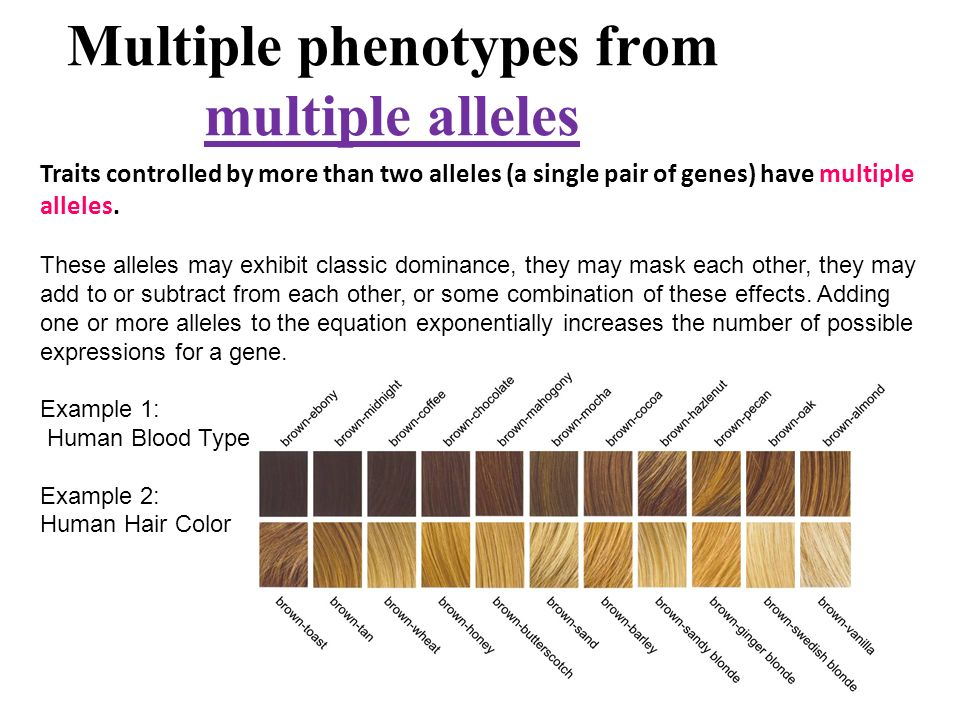 Section Objectives Distinguish Between Alleles For Incomplete