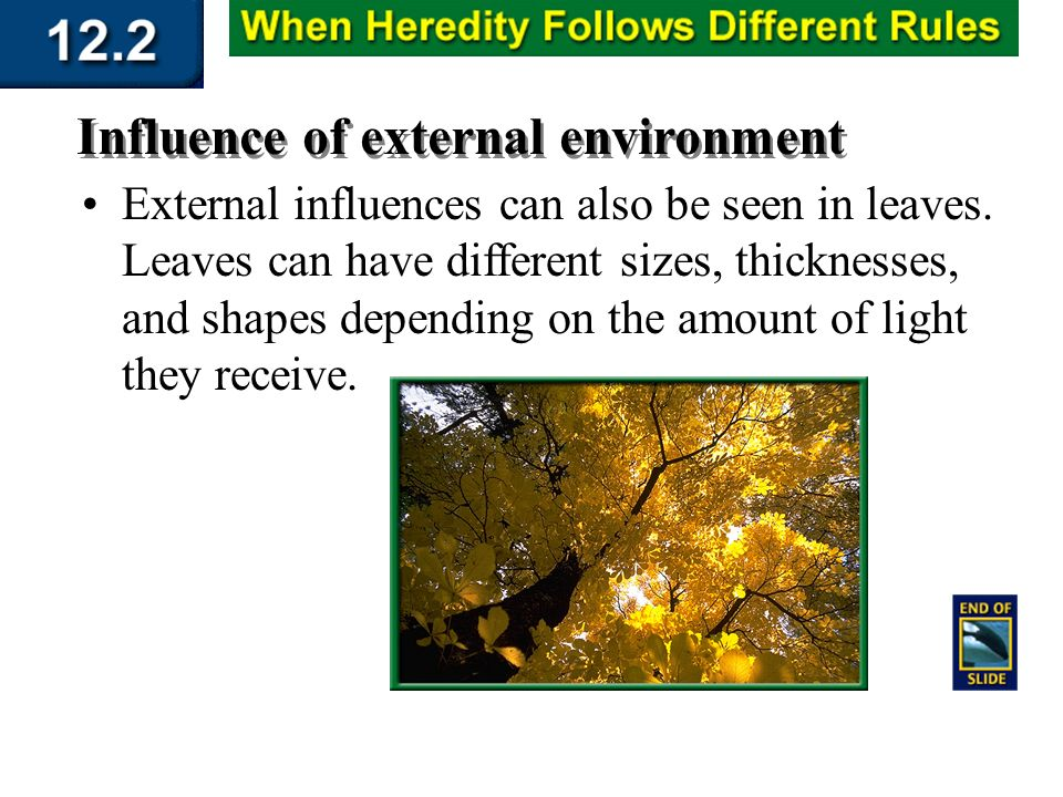 explain how external environment influence an Start studying external environment learn vocabulary, terms, and more with flashcards perspectives on the external environment's influence there are several perspectives that explain how and why organizations are impacted by their external environment.