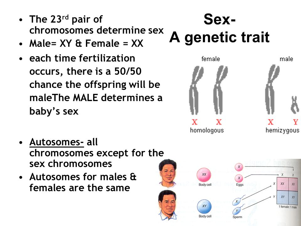 Chromosomes determining gene sex sex